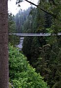 Qing - High Swinging Bridge
