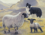 Sheep Prints Posters - Highland Spirit Poster by John Silver