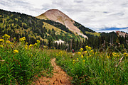 Wildflower Photos Posters - Hiking in La Sal Poster by Adam Romanowicz