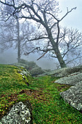 Giclee Mixed Media - Hiking in the Fog - Blue Ridge Mountains I by Dan Carmichael