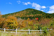 Foliage In White Mountains Posters - Hiking Trail Poster by Eunice Miller