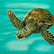 Hawaii Sea Turtle Paintings - Hilahila Shy Sea Turtle by Emily Brantley