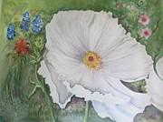 Lynn Maverick Denzer - Hill Country White Poppy