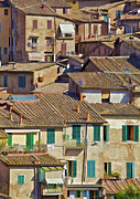 Hill Town Posters - Hill Town Village of Cortona Poster by David Letts