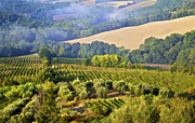 Grape Vineyard Framed Prints - Hills of Tuscany Framed Print by David Letts