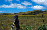 Fences Photos - Hills of Yellow by Kathy Yates