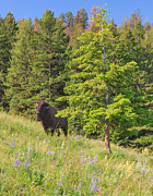 Charles Kozierok Art - Hillside Bison with Lupines by Charles Kozierok