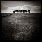 Monochrome Prints - Hilltop Copse Print by David Bowman