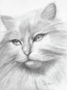 Kitty Drawings Posters - Himalayan Cat Poster by Lena Auxier