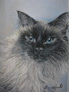 Cat Pastels - Himalayan cat by Ursula Brozovich