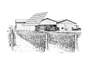 Vineyard Landscape Drawings Prints - Hinterbrook Winery Print by Steve Knapp