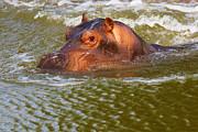 Nick  Biemans - Hippo head