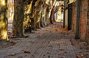Uruguay Framed Prints - Historic Tree Lined Street Framed Print by Jess Kraft