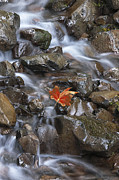 Red Leaves Photos - Hitching A Ride III by Sandra Bronstein
