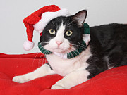 Canvas  Black And White Cat Photos - Ho Ho Kitty  by Kimber  Butler
