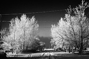 Harsh Conditions Photo Metal Prints - hoar frost covered trees on street in small rural village of Forget Saskatchewan Canada Metal Print by Joe Fox