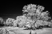 hoar frost on trees in small rural farming community during winter Forget Saskatchewan Canada Print by Joe Fox