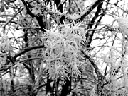 Ice Fog Framed Prints - Hoarfrost 13  Framed Print by Will Borden