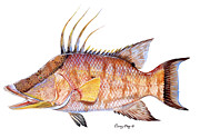 Redfish Paintings - Hog Fish by Carey Chen