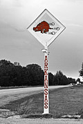 Red Hog Prints - Hog Sign Print by Scott Pellegrin