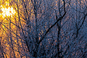Natural Focal Point Photography - Hokkaido Rising Winter...