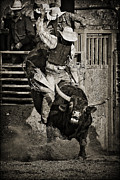 Bull Rider Art Framed Prints - Hold On-sepia Framed Print by Priscilla Burgers
