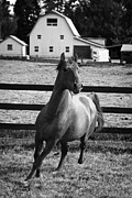 Forelock Photos - Hold Your Head High D9171 by Wes and Dotty Weber