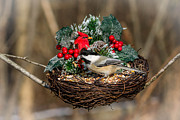Nest Pyrography Posters - Holiday Chickadee Poster by Rebecca Brooks