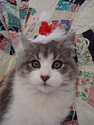 Holiday Kitten Print by Leslie Manley