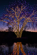 Celebrate Photo Prints - Holiday Lights Print by Juli Scalzi