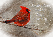 Red Bird In Snow Prints - Holiday Magic Cardinal Card Print by Lois Bryan
