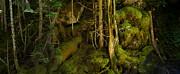 Robert Bissett - Hollow Tree