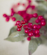 Holly Posters - Holly Berries Poster by Rebecca Cozart