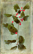 Dan Carmichael - Holly Branch with Red...