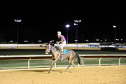 Horses Prints - Hollywood Casino at Charles Town Races - 121224 Print by DC Photographer