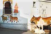 Still Life Photographs Originals - Holy Cow... Living roots by Gurpreet Artist