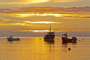 Holy Island Prints - Holy Island November Sunrise Print by John Potter