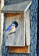 Bluebird Painting Metal Prints - Home Again Metal Print by John W Walker