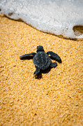 Sea Turtle Photos - Home by Sebastian Musial