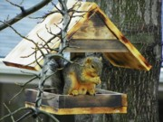 Squirrel Mixed Media - Home Sweet Home by Photography Moments - Sandi