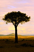 Masai Mara Prints - Home To Roost Print by Aidan Moran