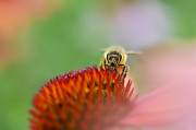Dan Friend - honey bee pastel background
