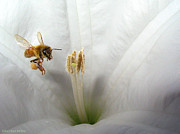 Joyce Dickens Metal Prints - Honey Bee Up Close And Personal Metal Print by Joyce Dickens