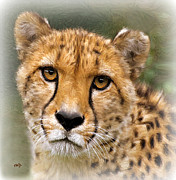 Cheetah Digital Art - Honey by Valerie Anne Kelly