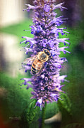 Nectar Framed Prints - Honeybee on Hyssop Framed Print by Mary Machare