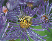 Aster  Painting Framed Prints - Honeybee on Purple Aster Framed Print by Lucinda V VanVleck