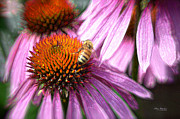 Sunny Afternoon Framed Prints - Honeybee on the Coneflower Framed Print by Mary Machare