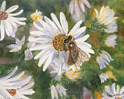 Aster  Painting Framed Prints - Honeybee on White Aster Framed Print by Lucinda V VanVleck