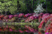 Honor Originals - Honor Heights Park Azalea Festival by Carolyn Fletcher