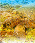 Laniakea Beach Metal Prints - Honu  Sea Turtle Metal Print by Dorlea Ho